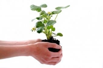 Best Moving Companies don't move plants