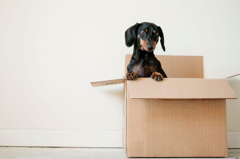 dog, box